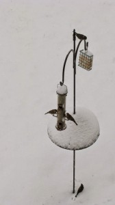 Finches in snow 1