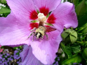 Bumble-bee 02