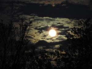 Pink moon 1