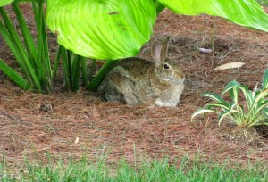 Rabbit haven 02