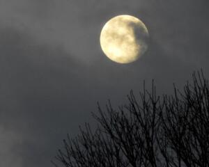 Wolf moon 06 better
